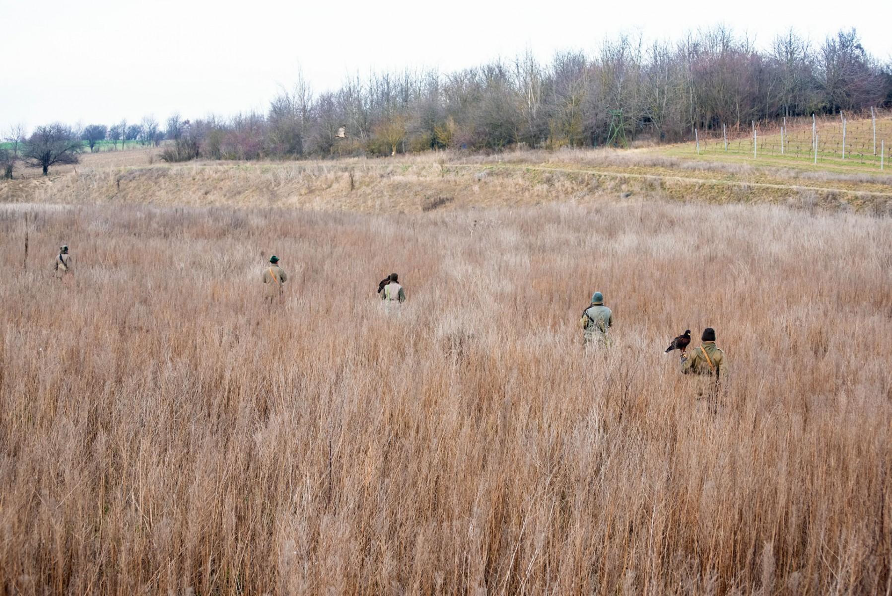 Die Falkner durchstreifen das Gelände