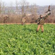 Akina startet zum Jagdflug