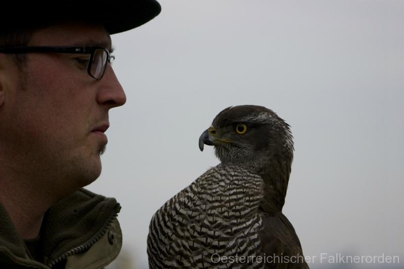 Falkner und Habicht