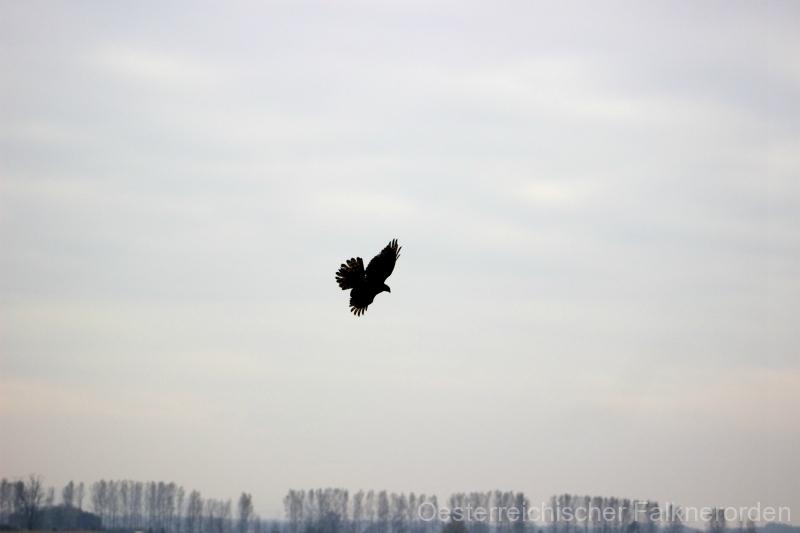 Jagdflug