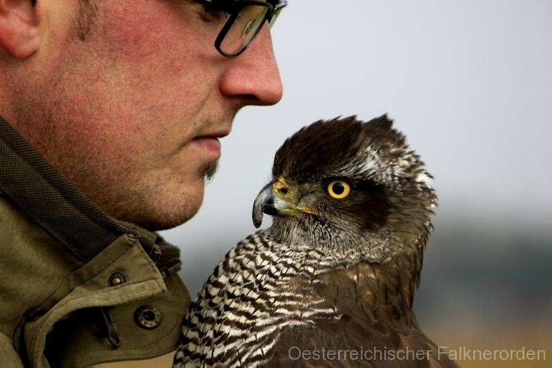 Freundschaft verbindet den Falkner und seinen Beizvogel