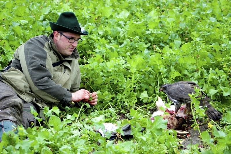 Ausruhen von Falkner und Vogel nach dem Beizerfolg