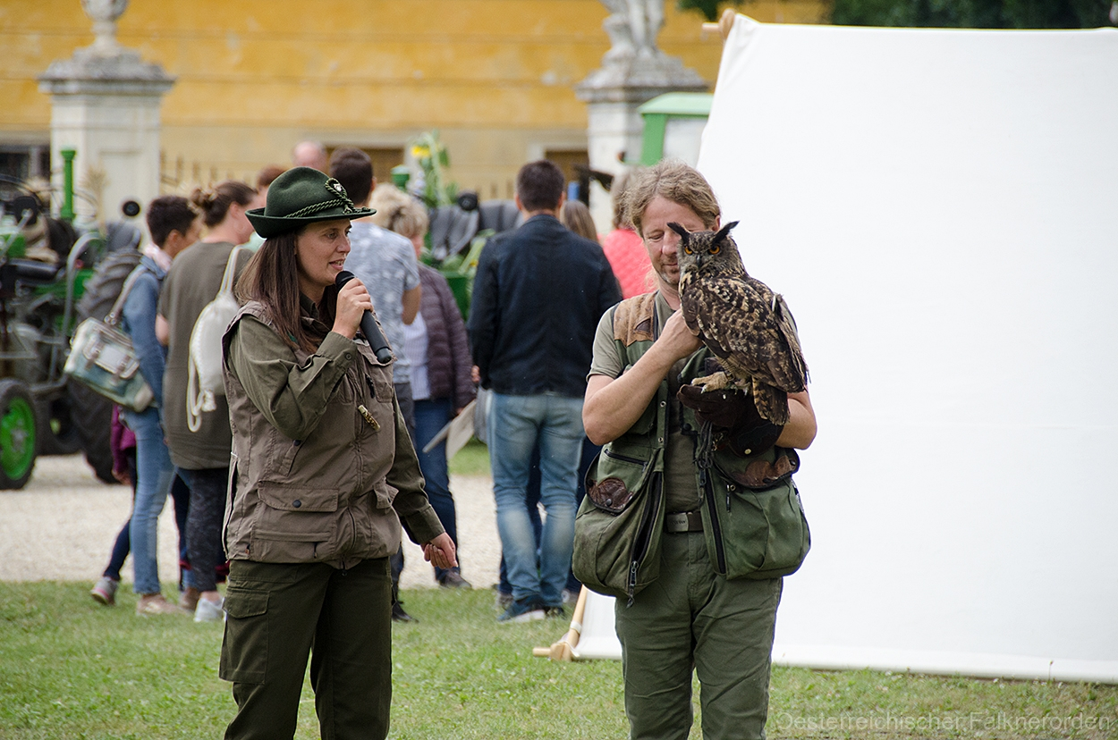 Moderation mit Interessante  Details zu den Greifvögeln