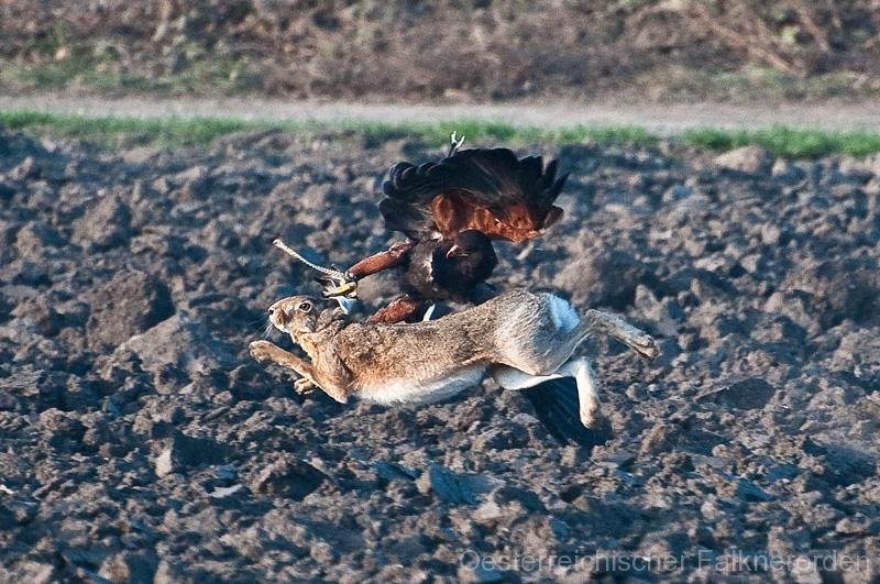 Gut dass Hasen lange Löffel haben