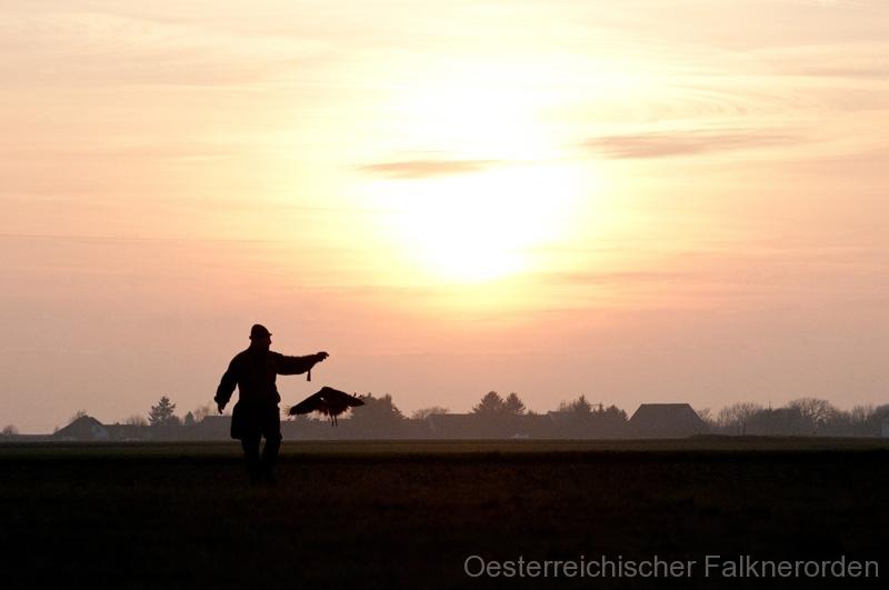 Nach dem letzte Flug kehrt der Beizvogel zurück zur Faust des Falkners