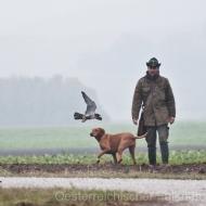 Falkner, Hund und Falke - das perfekte Trio