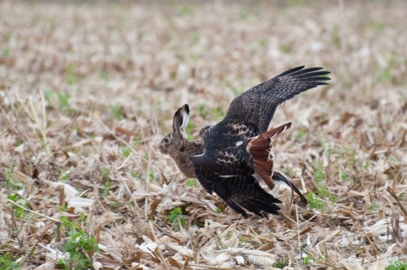 Der Vogel fliegt die Haken mit