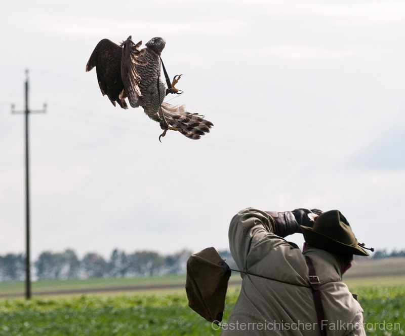 ...und mit voller Wucht wird der Beizvogel geworfen