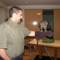 Der Mäusebussard holt sich seine Belohnung auf der Faust eines Kursteilnehmers