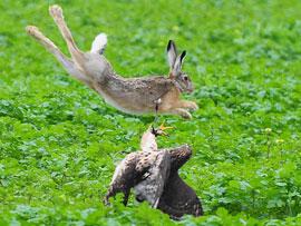 Momentaufnahme eines Jagdfluges