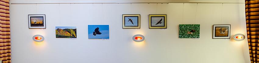 Ausstellung Greifvögel und Wein